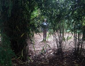 bamboolittle