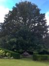 treelittle